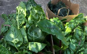 Span's Community Garden Produce